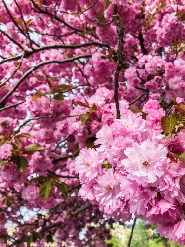Örebro - Fleurs