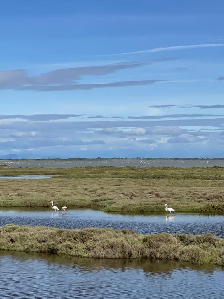 Digue à la mer en Camargue - Flamants roses